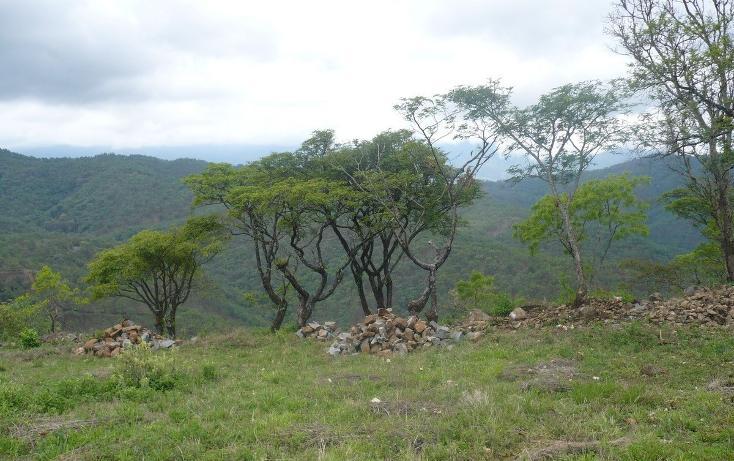 Foto de terreno habitacional en venta en  , los timbres, temascaltepec, méxico, 829483 No. 09