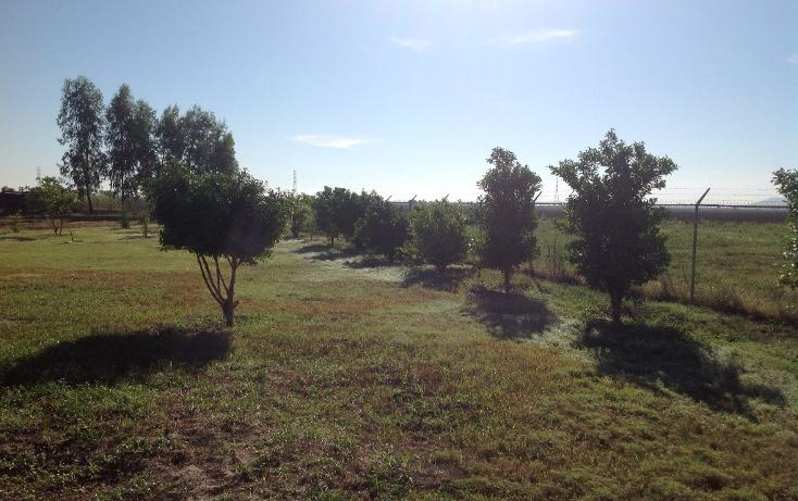 Foto de rancho en venta en lote 16, 17 y 18, flor azul sn, flor azul, ahome, sinaloa, 1710110 no 06