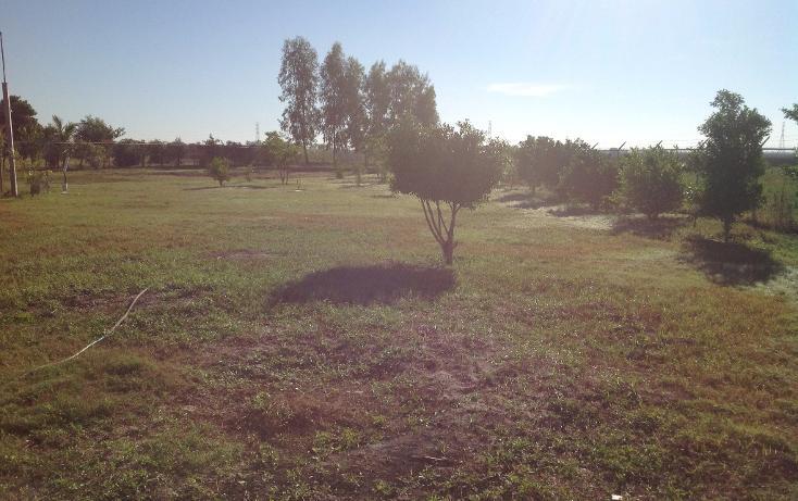 Foto de rancho en venta en  , flor azul, ahome, sinaloa, 1710110 No. 08