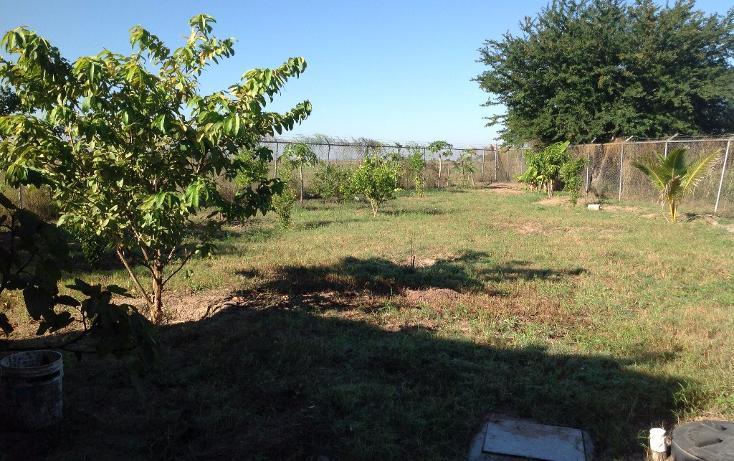 Foto de rancho en venta en lote 16, 17 y 18, flor azul sn, flor azul, ahome, sinaloa, 1710110 no 09