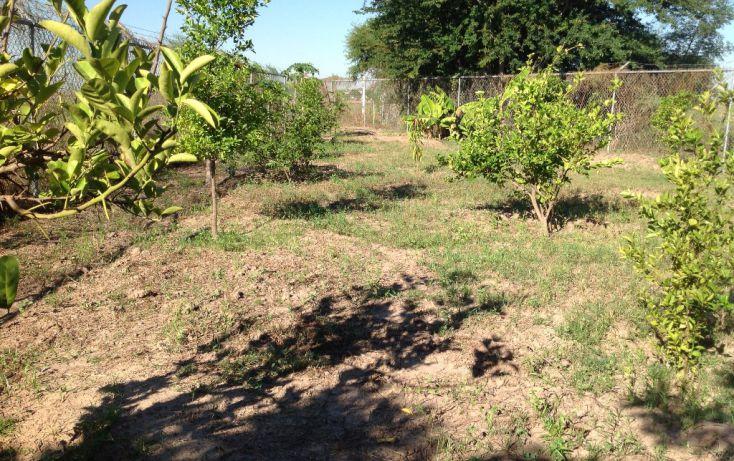 Foto de rancho en venta en lote 16, 17 y 18, flor azul sn, flor azul, ahome, sinaloa, 1710110 no 11