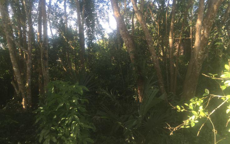 Foto de terreno habitacional en venta en, macario gómez, tulum, quintana roo, 1626738 no 04