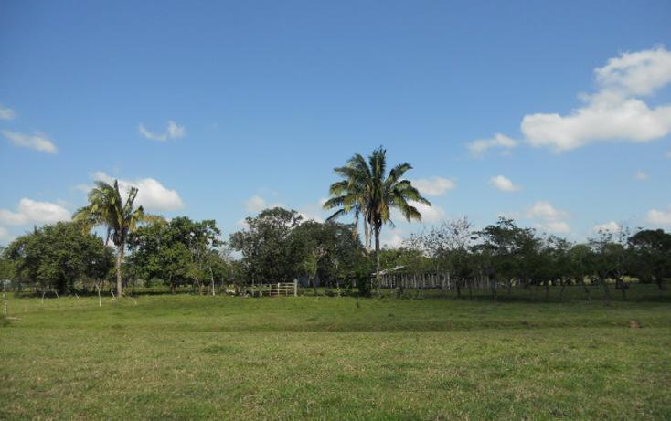 Foto de rancho en venta en  , macuspana centro, macuspana, tabasco, 1696846 No. 03