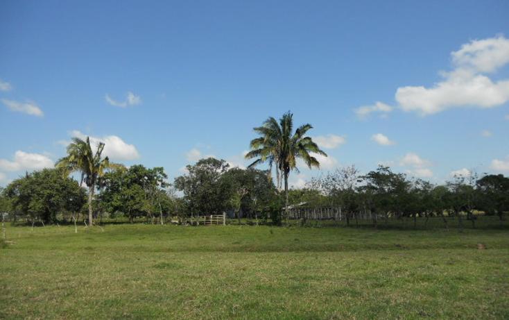 Foto de rancho en venta en  , macuspana centro, macuspana, tabasco, 1855084 No. 03