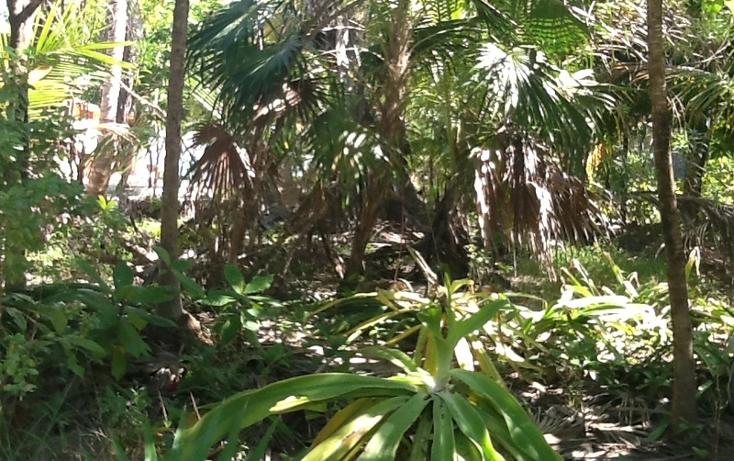 Foto de terreno habitacional en venta en  , mahahual, oth?n p. blanco, quintana roo, 1863034 No. 03