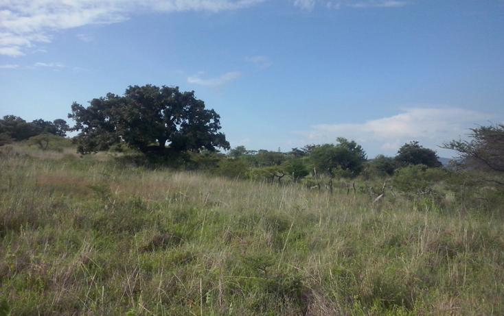 Foto de terreno comercial en venta en  , mazamitla, mazamitla, jalisco, 1507287 No. 07