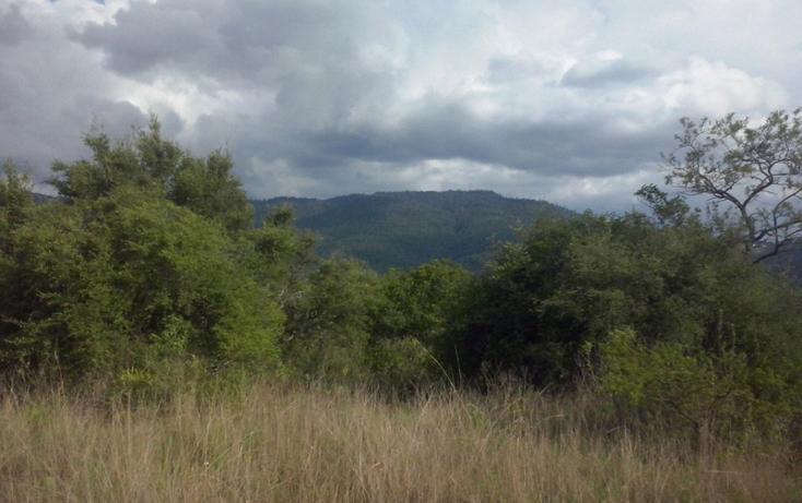 Foto de terreno comercial en venta en  , mazamitla, mazamitla, jalisco, 1507287 No. 08
