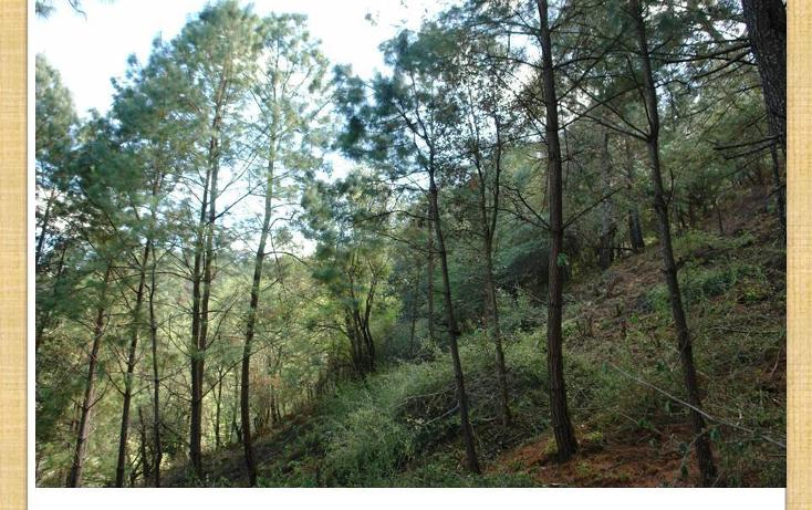 Foto de terreno habitacional en venta en  , mazamitla, mazamitla, jalisco, 2034108 No. 03
