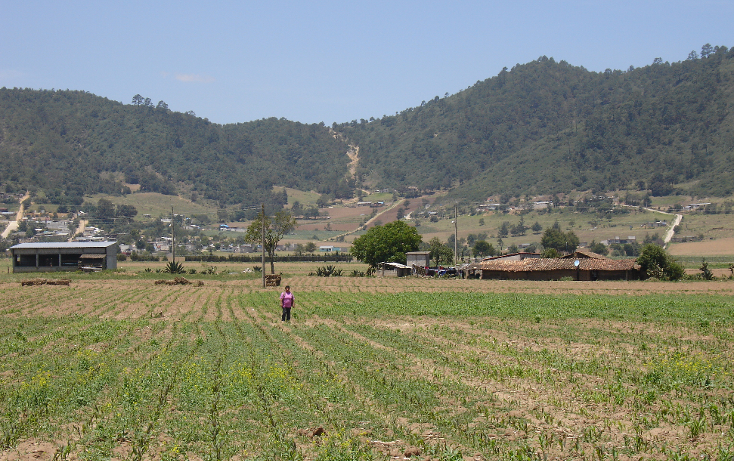 Foto de terreno comercial en venta en  , mazapa, zacapoaxtla, puebla, 1134349 No. 08