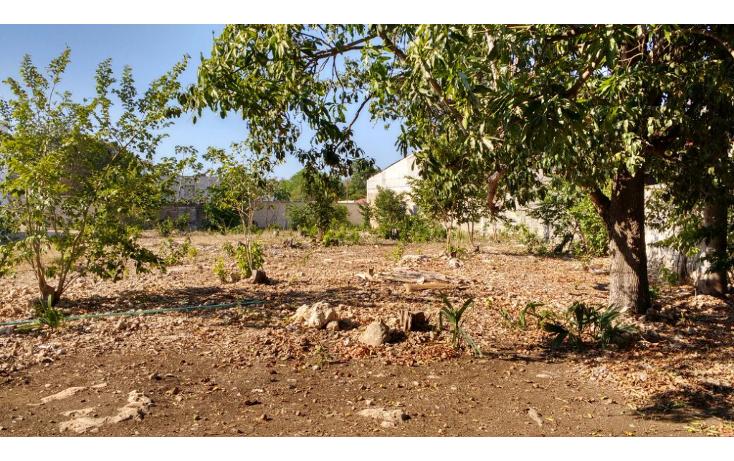 Foto de terreno habitacional en venta en  , merida centro, m?rida, yucat?n, 1957138 No. 06