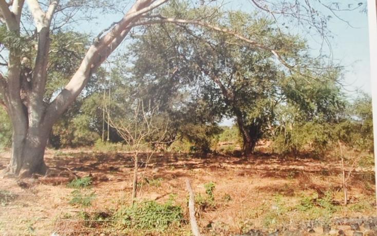 Foto de terreno comercial en venta en  , mezcales, bahía de banderas, nayarit, 1655511 No. 05