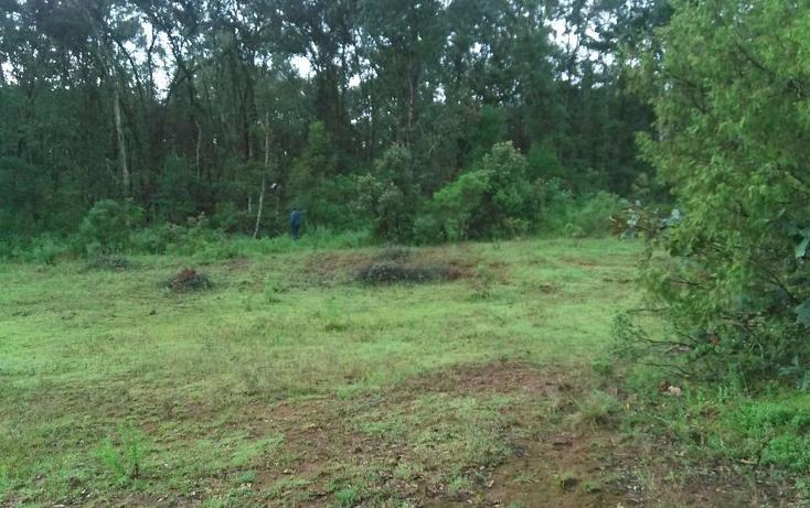 Foto de terreno habitacional en venta en  , mixquiapan, omitlán de juárez, hidalgo, 2624539 No. 03