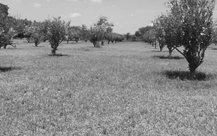 Foto de rancho en venta en  , montemorelos centro, montemorelos, nuevo león, 1046557 No. 03