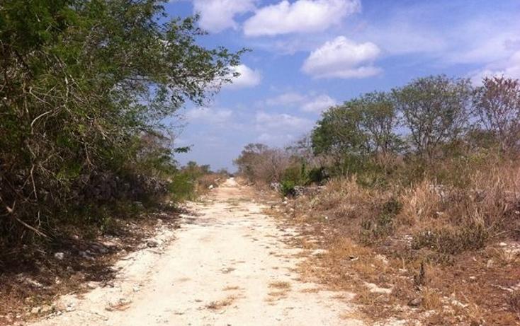 Foto de terreno comercial en venta en  , motul de carrillo puerto centro, motul, yucatán, 1051785 No. 05