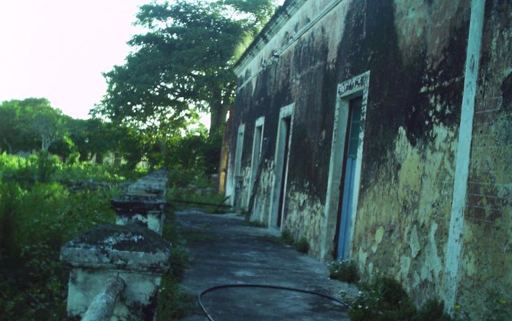Foto de rancho en venta en  , motul de carrillo puerto centro, motul, yucatán, 1177703 No. 02