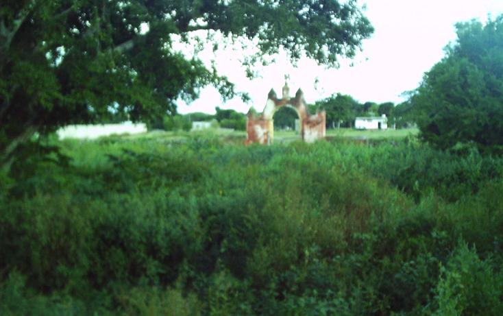 Foto de rancho en venta en  , motul de carrillo puerto centro, motul, yucatán, 1177703 No. 06