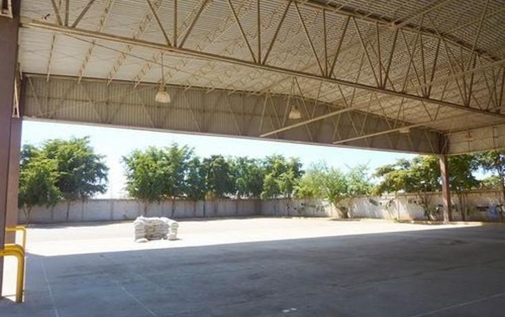 Foto de nave industrial en venta en  , navolato centro, navolato, sinaloa, 1091089 No. 05
