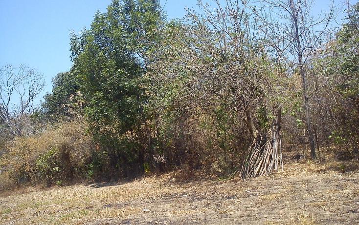 Foto de terreno habitacional en venta en  , nepantla de sor juana inés, tepetlixpa, méxico, 1986229 No. 08