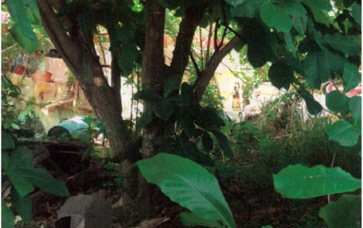 Foto de terreno comercial en venta en  nonumber, 10 de abril, cozumel, quintana roo, 1461535 No. 04