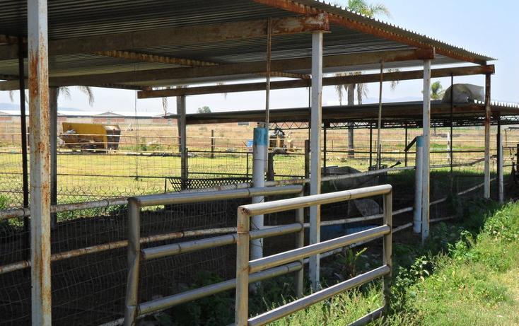 Foto de terreno habitacional en venta en  , nuevo méxico, zapopan, jalisco, 452412 No. 09