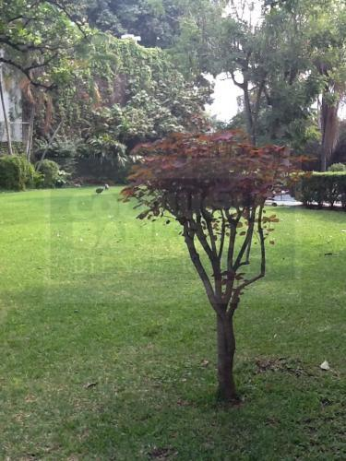 Foto de terreno habitacional en venta en numero reelección 264, emiliano zapata, emiliano zapata, morelos, 220246 No. 01