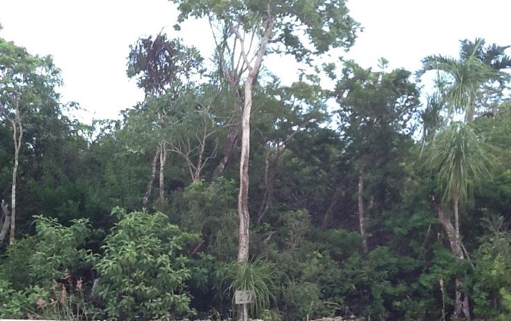 Foto de terreno habitacional en venta en  , paamul, solidaridad, quintana roo, 1475845 No. 02