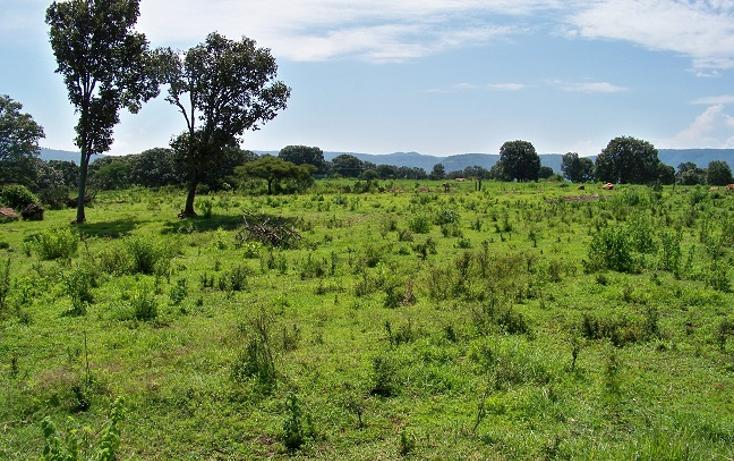Foto de rancho en venta en  , palo alto, tecolotl?n, jalisco, 1514364 No. 01