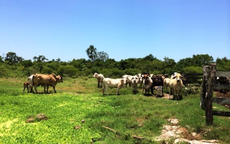 Foto de rancho en venta en  , panaba, panabá, yucatán, 1553036 No. 01