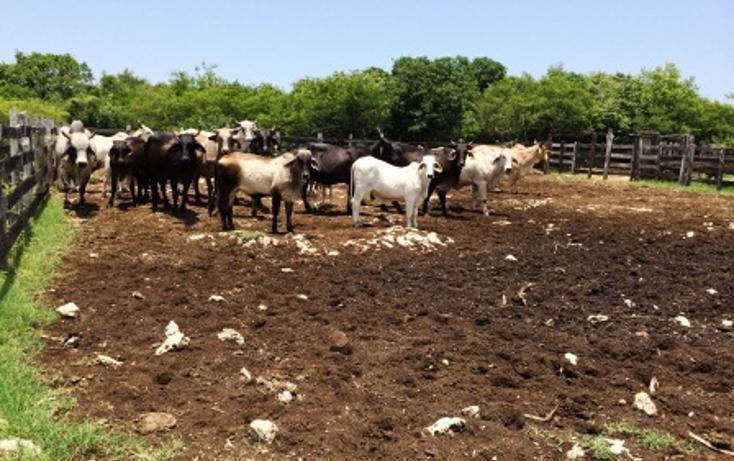 Foto de rancho en venta en  , panaba, panabá, yucatán, 1553036 No. 02