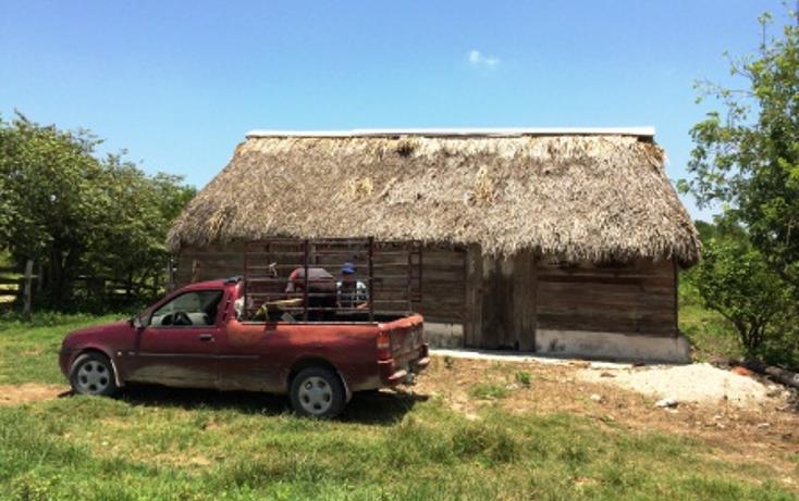 Foto de rancho en venta en  , panaba, panabá, yucatán, 1553036 No. 04