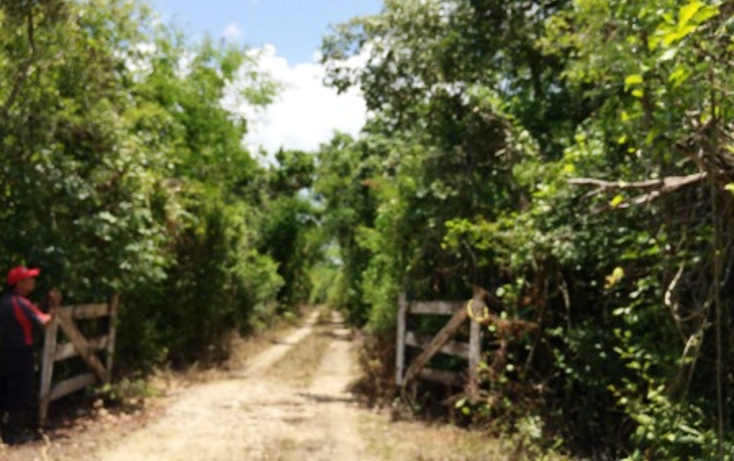 Foto de rancho en venta en  , panaba, panabá, yucatán, 1553036 No. 05