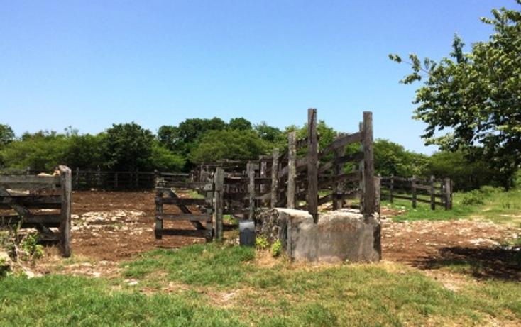 Foto de rancho en venta en  , panaba, panabá, yucatán, 1553036 No. 06