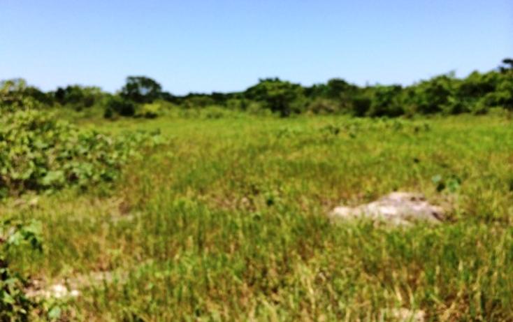 Foto de rancho en venta en  , panaba, panabá, yucatán, 1553036 No. 08