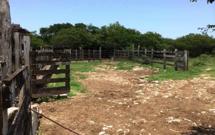 Foto de rancho en venta en  , panaba, panabá, yucatán, 1553036 No. 09