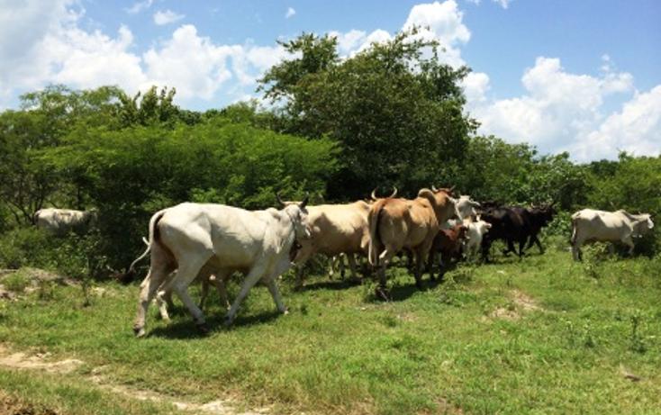 Foto de rancho en venta en  , panaba, panabá, yucatán, 1553036 No. 11