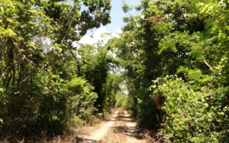 Foto de rancho en venta en  , panaba, panabá, yucatán, 1553036 No. 17