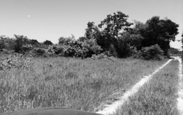 Foto de rancho en venta en  , panaba, panabá, yucatán, 1553036 No. 18