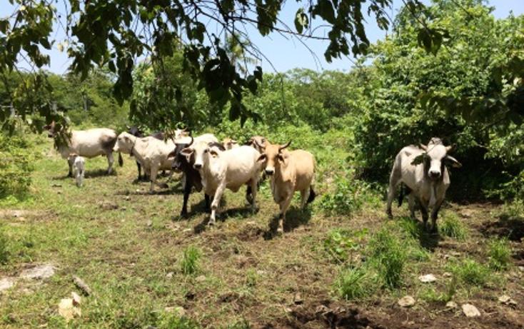 Foto de rancho en venta en  , panaba, panabá, yucatán, 1553036 No. 19