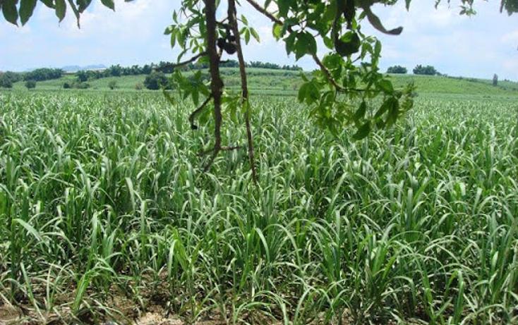 Foto de terreno habitacional en venta en  , pantanal, xalisco, nayarit, 1298501 No. 04