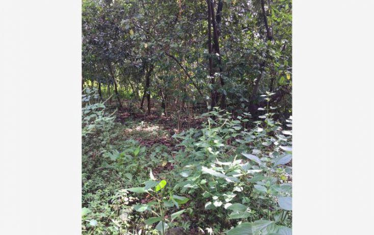 Foto de terreno habitacional en venta en paraje agua del prior, san andrés nicolás bravo, malinalco, estado de méxico, 1243831 no 02