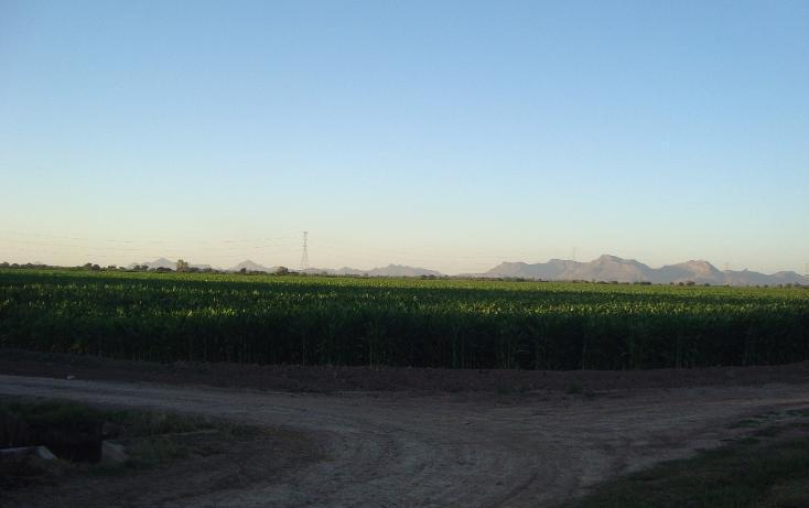 Foto de terreno habitacional en venta en parcela 134 z1 p/1/1 carretera a ej. felipe angeles , individual ahome, ahome, sinaloa, 1717100 No. 01