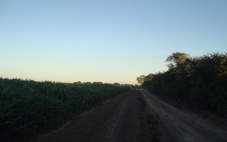 Foto de terreno habitacional en venta en parcela 134 z1 p/1/1 carretera a ej. felipe angeles , individual ahome, ahome, sinaloa, 1717100 No. 02
