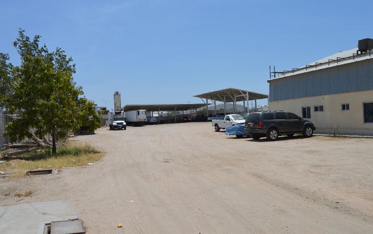 Foto de nave industrial en renta en  , parque industrial, la paz, baja california sur, 1241231 No. 15