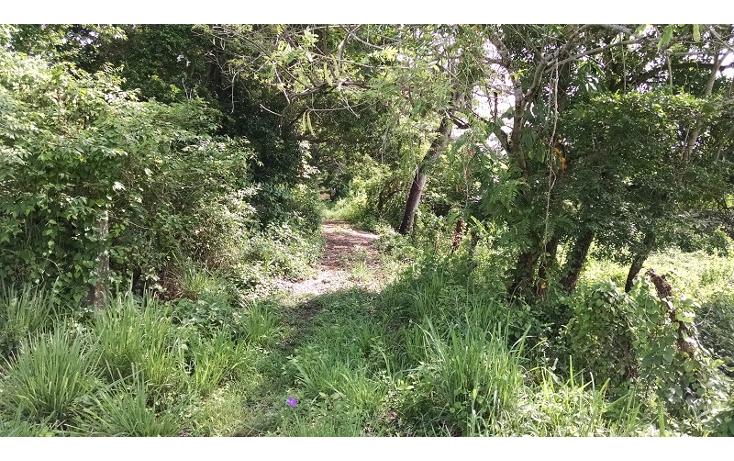 Foto de terreno comercial en venta en  , paso del toro, medell?n, veracruz de ignacio de la llave, 1088583 No. 03