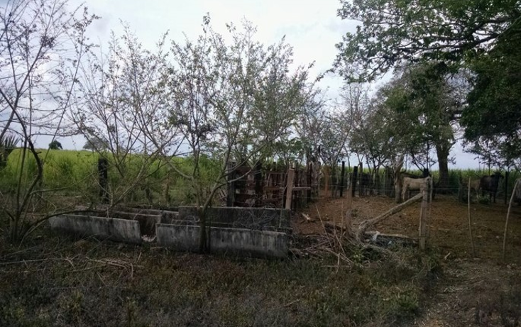 Foto de terreno comercial en venta en  , paso del toro, medellín, veracruz de ignacio de la llave, 1277191 No. 05