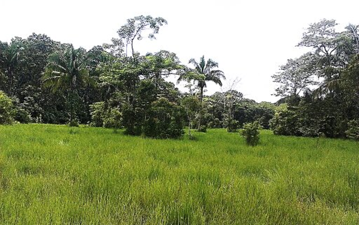 Foto de terreno comercial en venta en  , pejelagartero, huimanguillo, tabasco, 1122585 No. 07