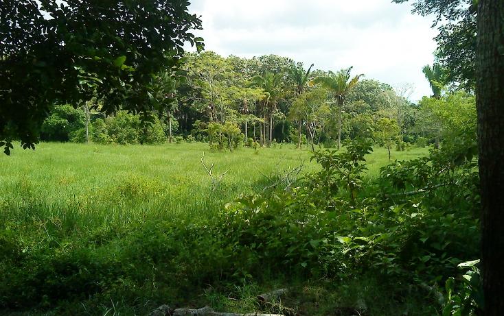Foto de terreno comercial en venta en  , pejelagartero, huimanguillo, tabasco, 1122585 No. 15