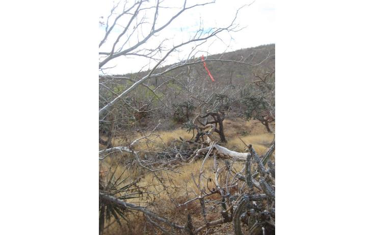 Foto de terreno habitacional en venta en  , pescadero, la paz, baja california sur, 1181997 No. 06
