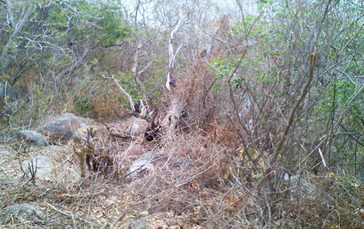 Foto de terreno habitacional en venta en  , pichilingue, acapulco de juárez, guerrero, 1612736 No. 14