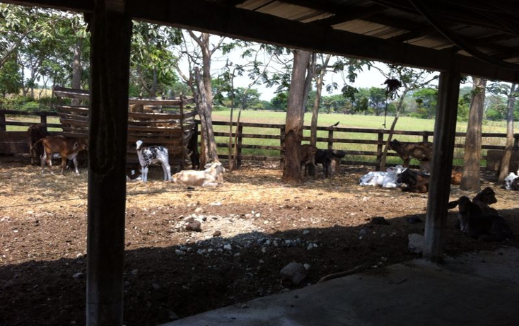 Foto de rancho en venta en  , pijijiapan centro, pijijiapan, chiapas, 1474289 No. 03